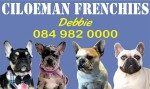 CILOEMAN (French Bulldog)