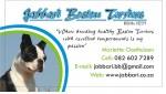 JABBARI (Boston Terrier)