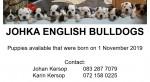 JOHKA (Bulldog)