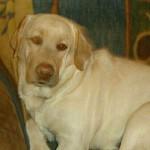 BRIDGEMAR (Retriever Labrador)