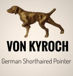 VON KYROCH (German Shorthaired Pointer)