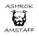ASHROK (American Staffordshire)