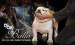 ROCKHAVEN (Bulldog)