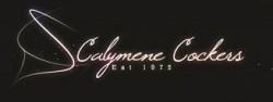 CALYMENE (Spaniel Cocker)