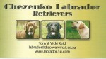 CHEZENKO (Retriever Labrador)