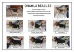 DHAMLA (Beagle)