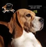 MONCHERAY (Beagle)