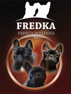 FREDKA (French Bulldog)