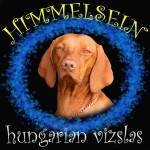 HIMMELSEIN (Hungarian Vizsla)
