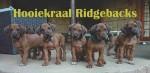 HOOIEKRAAL (Rhodesian Ridgeback)