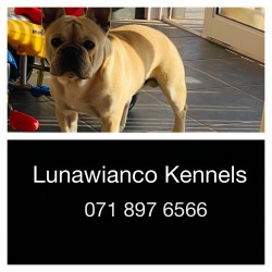 LUNAWIANCO (French Bulldog)