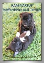 RAMINARTUS (Staffordshire Bull Terrier)