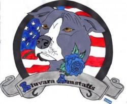 BLUVARA (American Staffordshire Terrier)