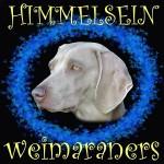 HIMMELSEIN (Weimaraner)